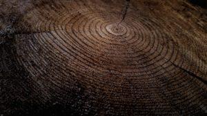 appraisaleconomics-tree-rings